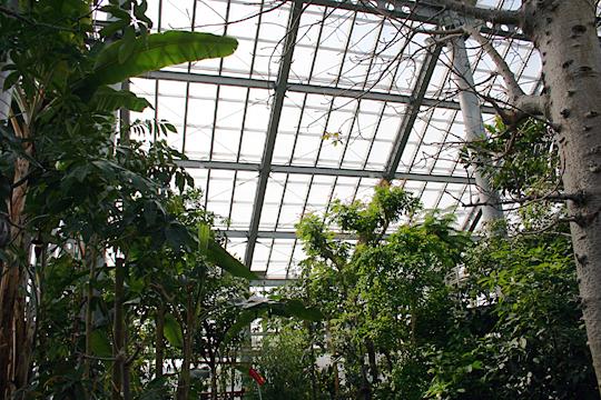 蒸し暑い熱帯果樹温室.jpg