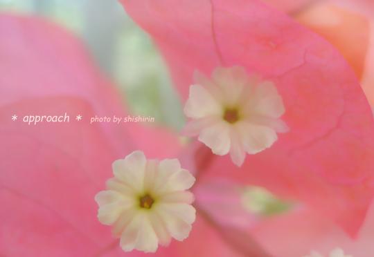 Flower-101s.jpg