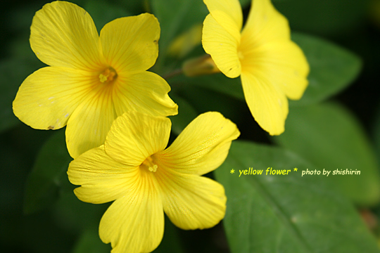 yellow-flower.jpg